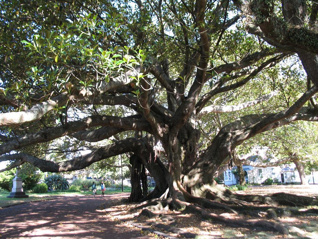 016 - Albert Park - Crazy Tree