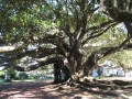 016 - Albert Park - Crazy Tree