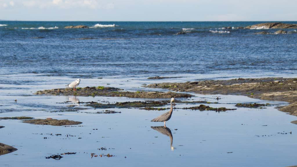 Reflet de l'oiseau à Kaikoura Range