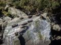 386 - Phoques de Milford Sound