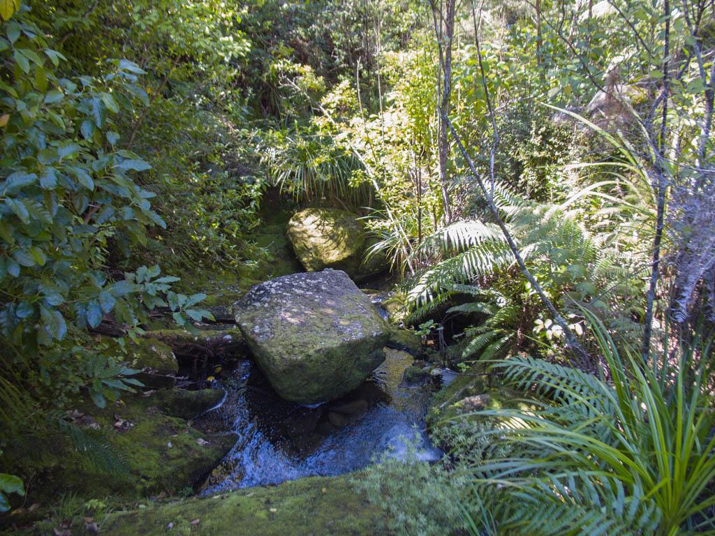 Dans la forêt d'Abel Tasman National Park