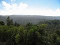 116 - Waipoua Forest