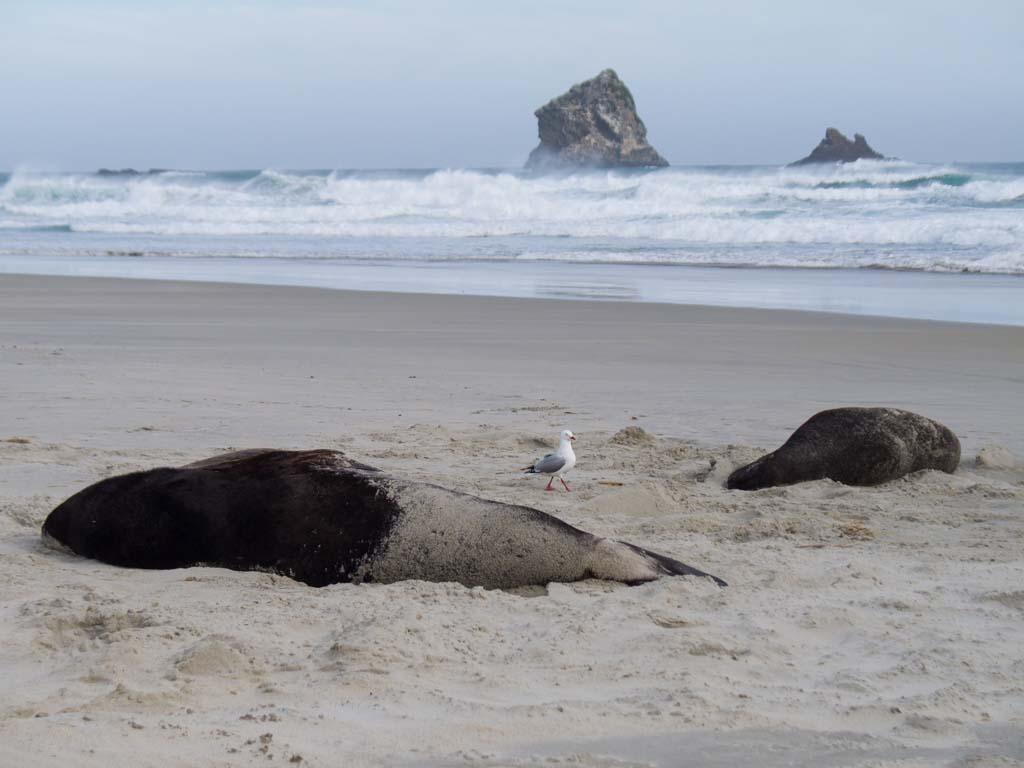 Lions de mer qui dorment