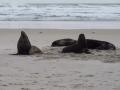 Réveil des lions de mer